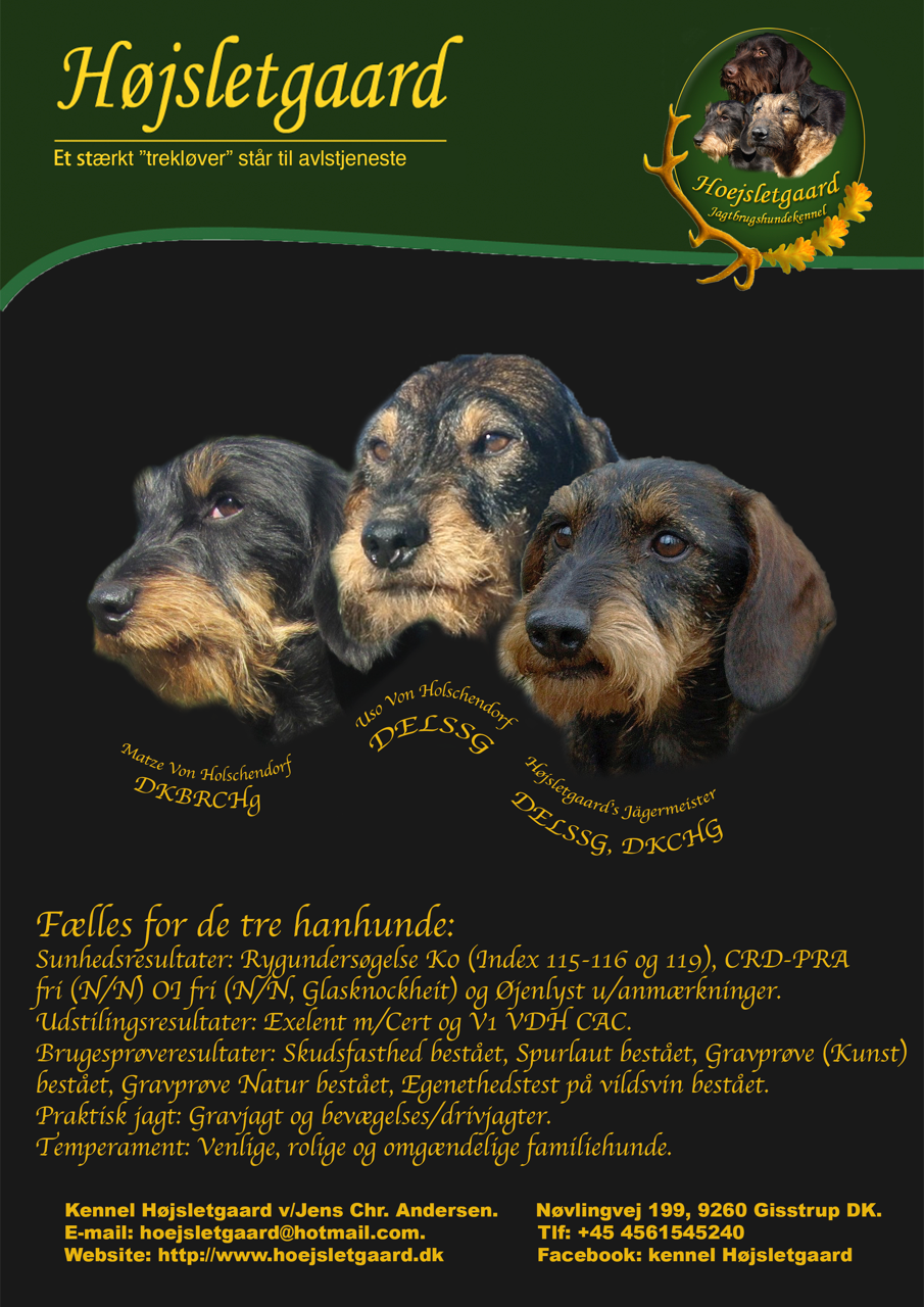 Hanhunde annonce DC 2018